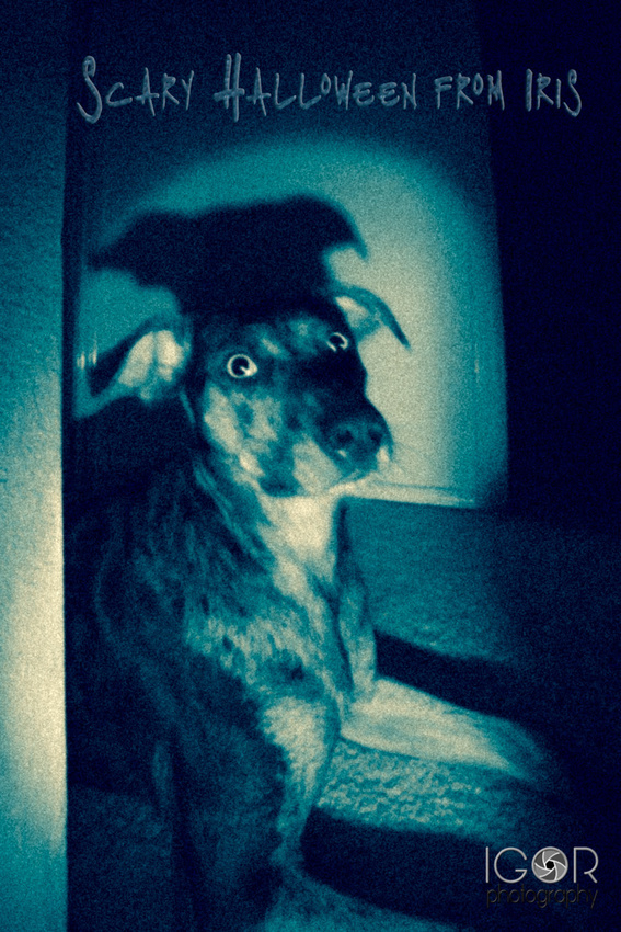 scary iris 03757 Edit Scary Halloween